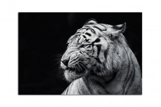 Фотокартина белый тигр