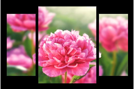 Модульная картина Розовые пионы
